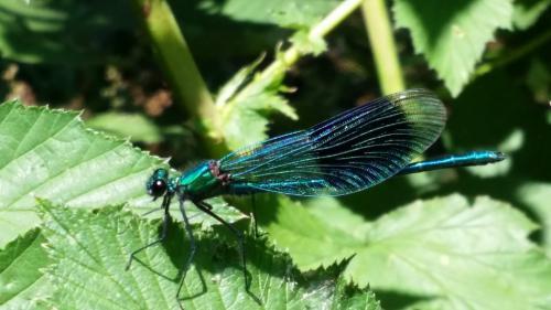 Papp Viktória (15) - Kék vándor