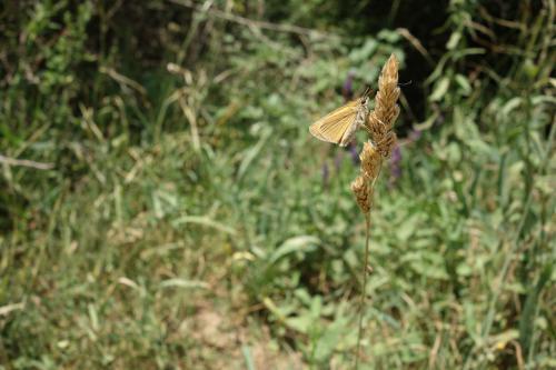 Vitrai János (13) - Pillangó a kalászon