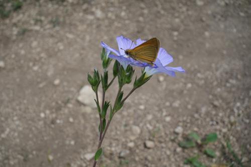Vitrai János (13) - Pillangó a virágon