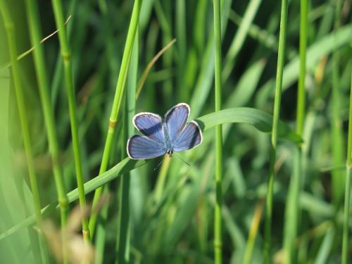Halász Virág (13) – Színek harmóniája