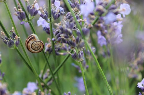 Zádor Nimród (9) – Mámorító illatok