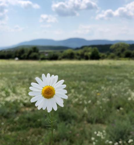 Reiser Janka (12) - Flower Power