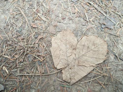 Farkas Lídia (9) – Szerelmes levél