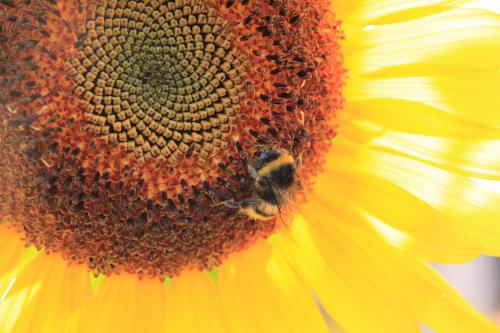 Buzás Domokos (13) – Fibonacci magok