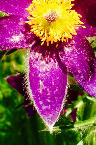 Balina Bianka (14) – Rózsaszín csoda