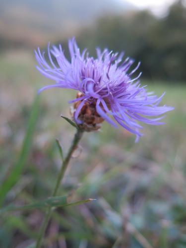 Halász Virág (13) – Torzonborz