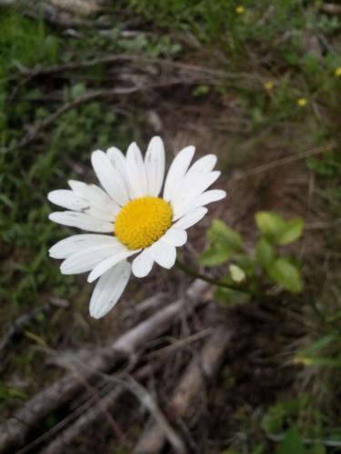 Selmeczi Márta (13) - Egyszerűen szép