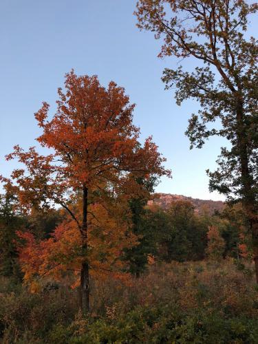 Reiser Janka (12) – Vörös ősz