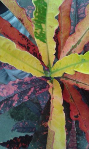 Varga Hajnalka Ilona (10) - Őszi levelek