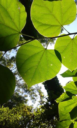 Varga Hajnalka Ilona (10) - Zöld levelek